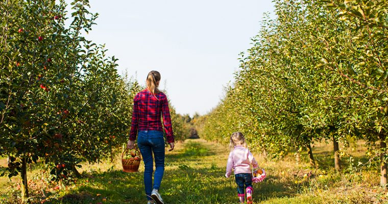 Pick Your Own Apples Soon!